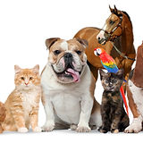 Global-Veterinary-Products-for-Companion