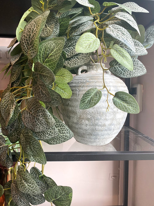 Large trailing fittonia