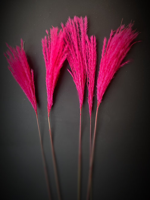 Cerise pink mini pampas/silver grass x 5