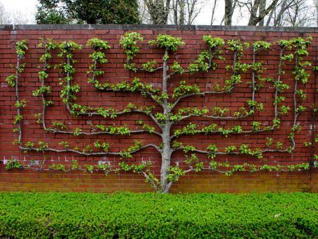 Spiritual Pruning
