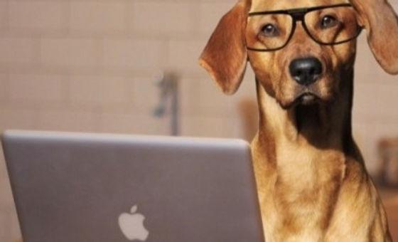 Computer dog_edited_edited_edited_edited_edited.jpg