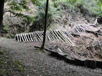 Espina de Bacallà