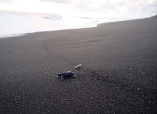 The Black Sands of Monterrico