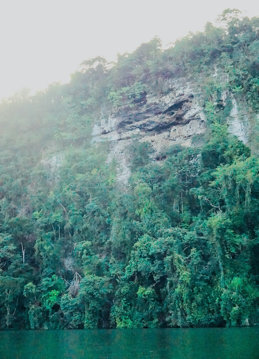 Lush canyon walls of the Rio Dulce, Guatemala