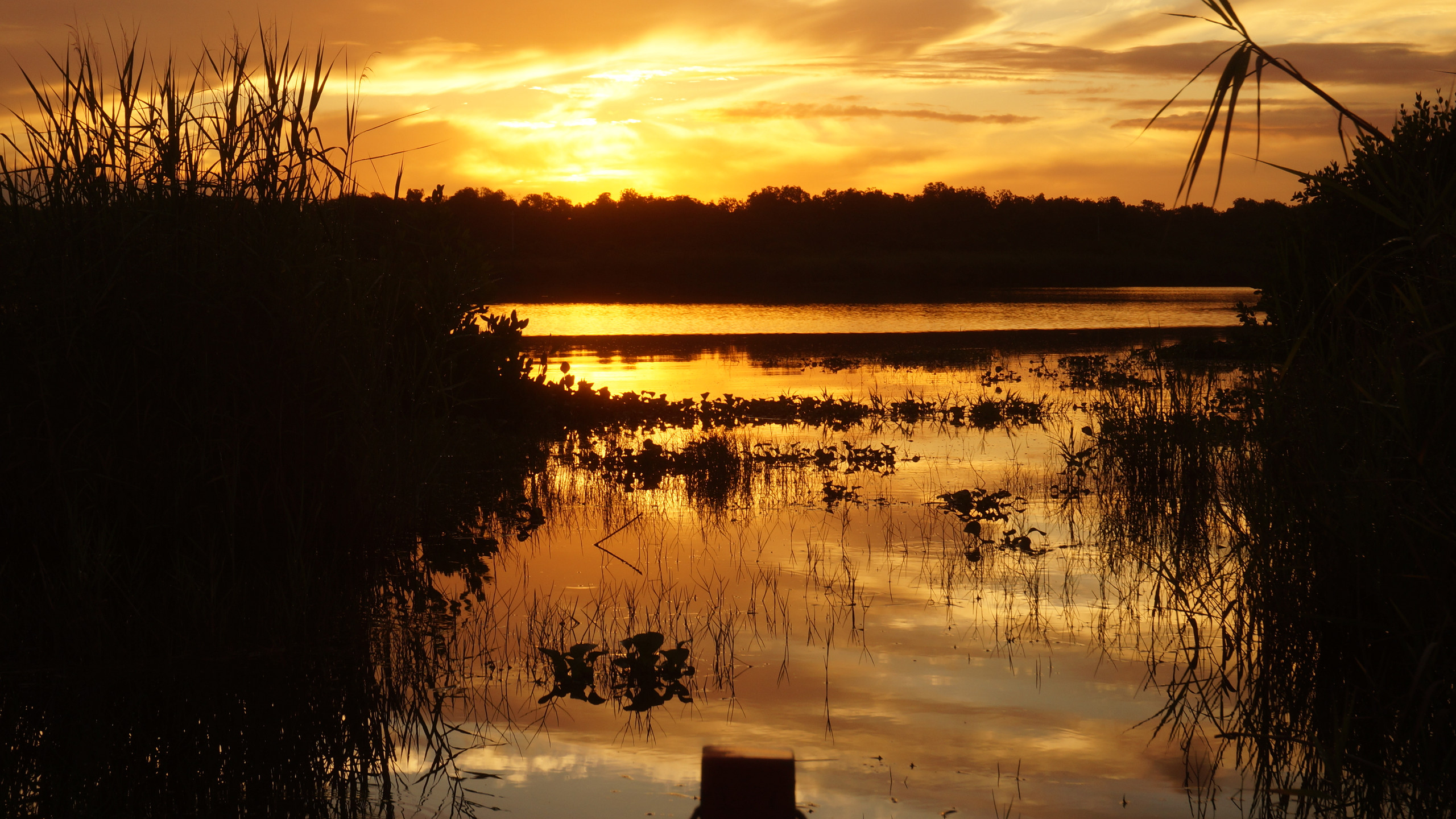 Sunrise on the mangrove swamp