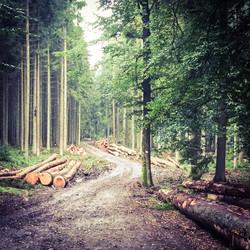 Wandelen in het bos vanuit la Borne