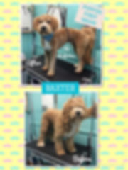 K9 Perfection Grooming Salon Wendell, NC - Baxter before and after