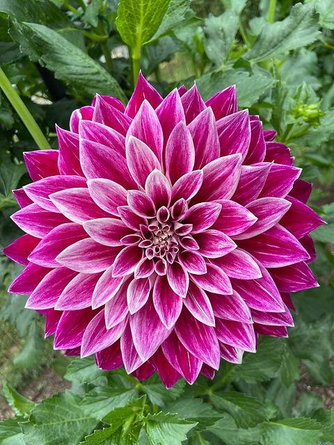 cylburn flower.jpg