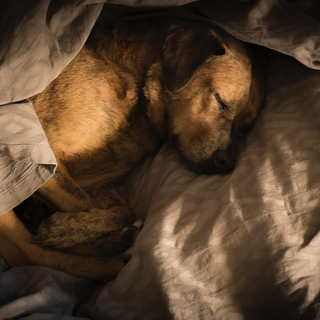 Do These 3 Things To Get a Guaranteed Better Nights Sleep