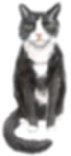 felix cat portrait.jpg