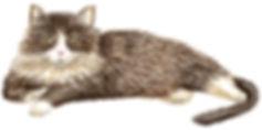 candy cat portrait.jpg
