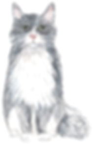 thomas cat portrait.jpg