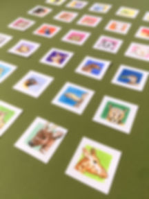 Close up of 30 animal illustrations on rainbow backgrounds
