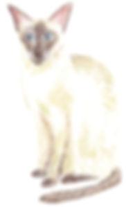 reg cat portrait.jpg