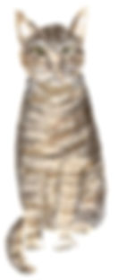 willow cat portrait.jpg