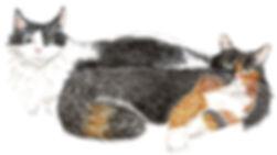 millie mabel cat portrait.jpg