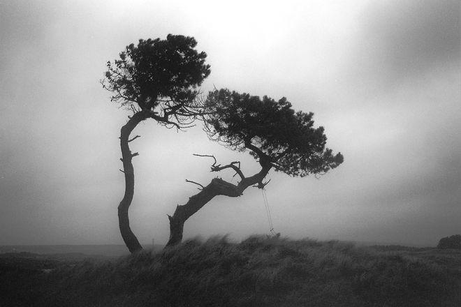 Tree with swing.jpg