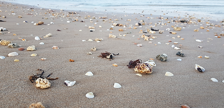 InPac_Plage_Coquillage.png