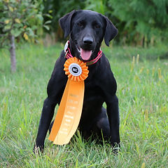 Gracie 1st jr hunt pass.jpg