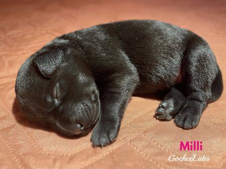 Jayda's puppy week 1️⃣