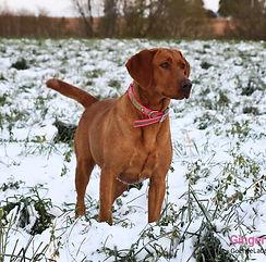 Ginger 11-1-19.jpg