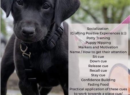 Virtual Puppy Training Classes
