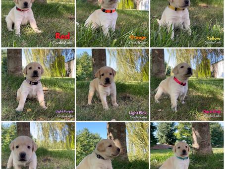 Sierra/Raider puppies week 4️⃣