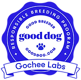 Puppy Culture Raised AKC Labradors | Gochee Labs
