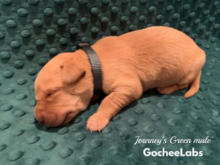 Journey/Raider puppies week 1️⃣.