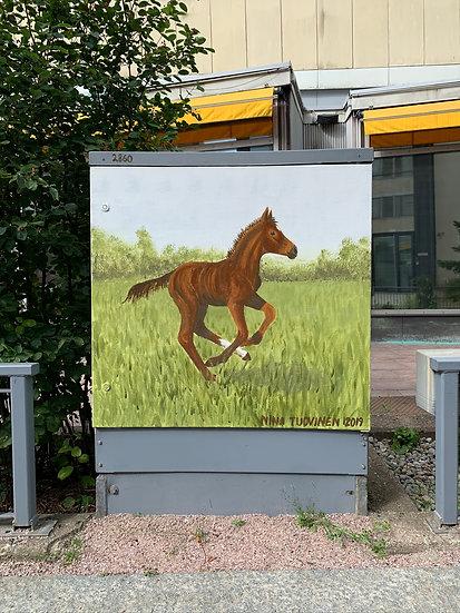 Spring foal - Electrix box
