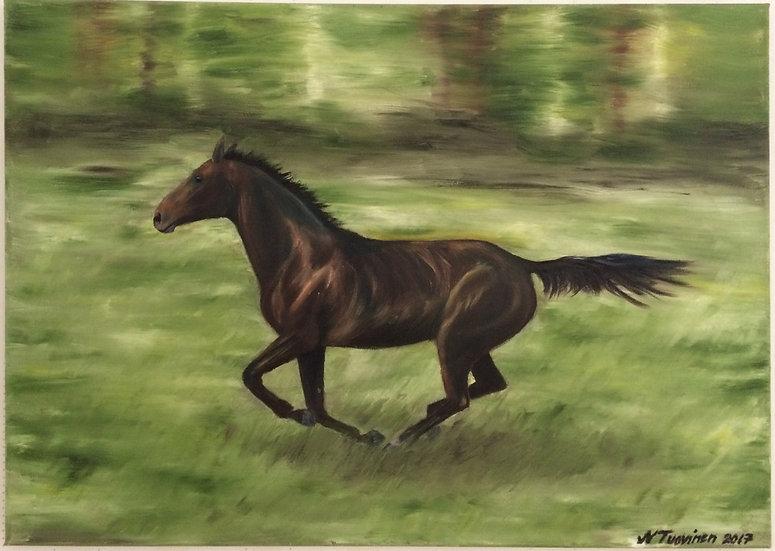 Gallop in the field (70x50cm)