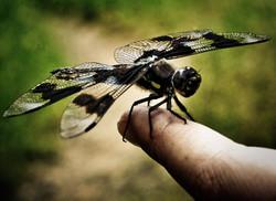 Dragonfly wakes up slowly