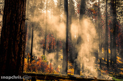 Fires in the Yosemite Woods