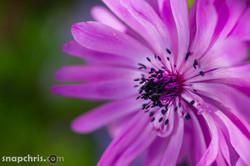 purple flower bloom