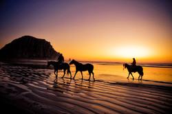 Morro Bay _ Horses on the beach