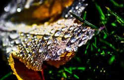 yellow dew covered leaf macro