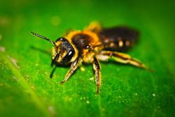 bee awakening