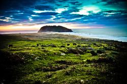 Lighthouse & Cows at Big Sur