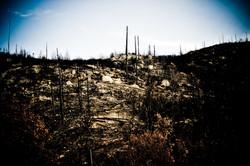 Devastation After the Fire