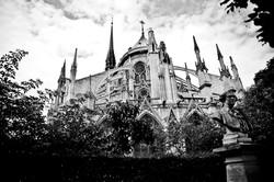 Notre Dame  majestic