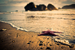 Stranded starfish have no place to hide still waiting for the swollen Easter tide