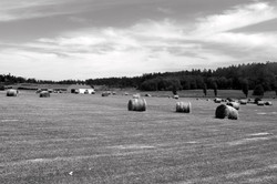 Hay Bales black and white