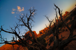 Farewell to Arches, bye moon, bye desert, bye red, bye gnarly trees