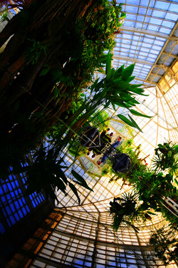 Bottanical Garden 338