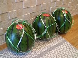 170630watermelon