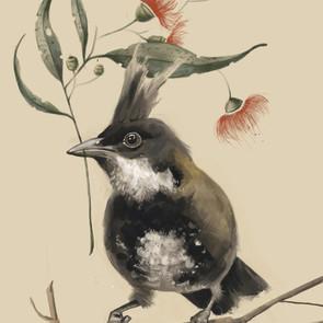 'Whipbird'
