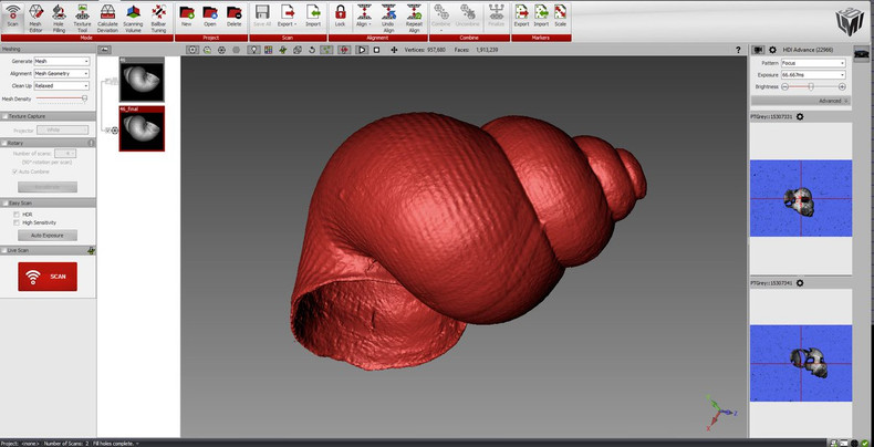 small shell 3d scan close up