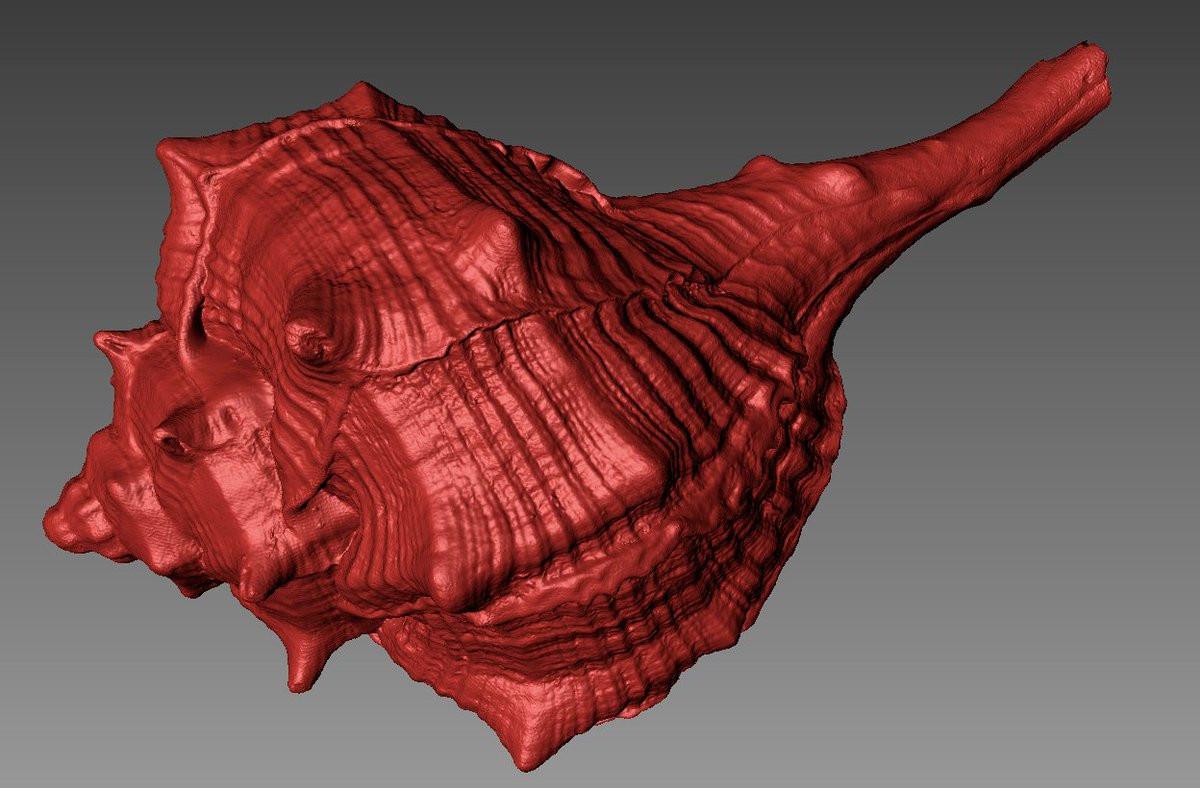 shell 3d scan 2