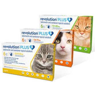 110-RevolutionPLUSCats.jpg