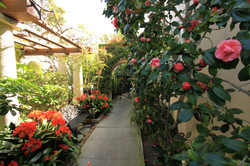 Our Floral Walkway